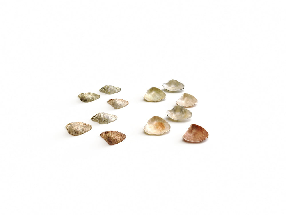 Sea Shell Set - Nouvelle Mesure Lab