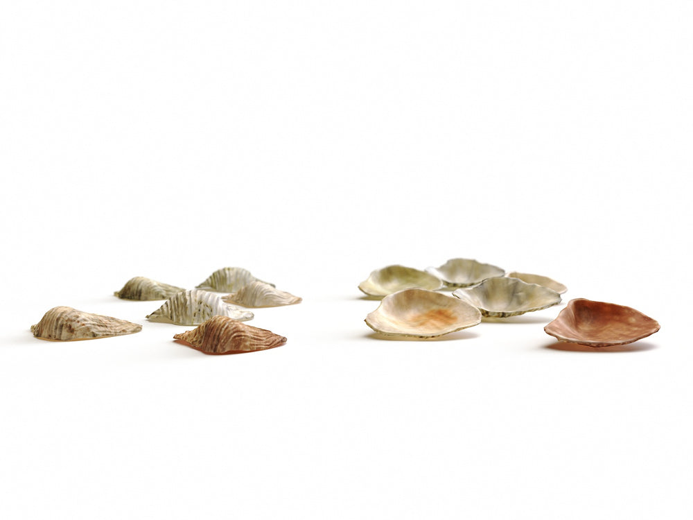 Load image into Gallery viewer, Sea Shell Set - Nouvelle Mesure Lab