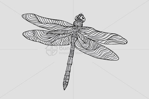 Dragonfly - Beautiful Insect Graphics