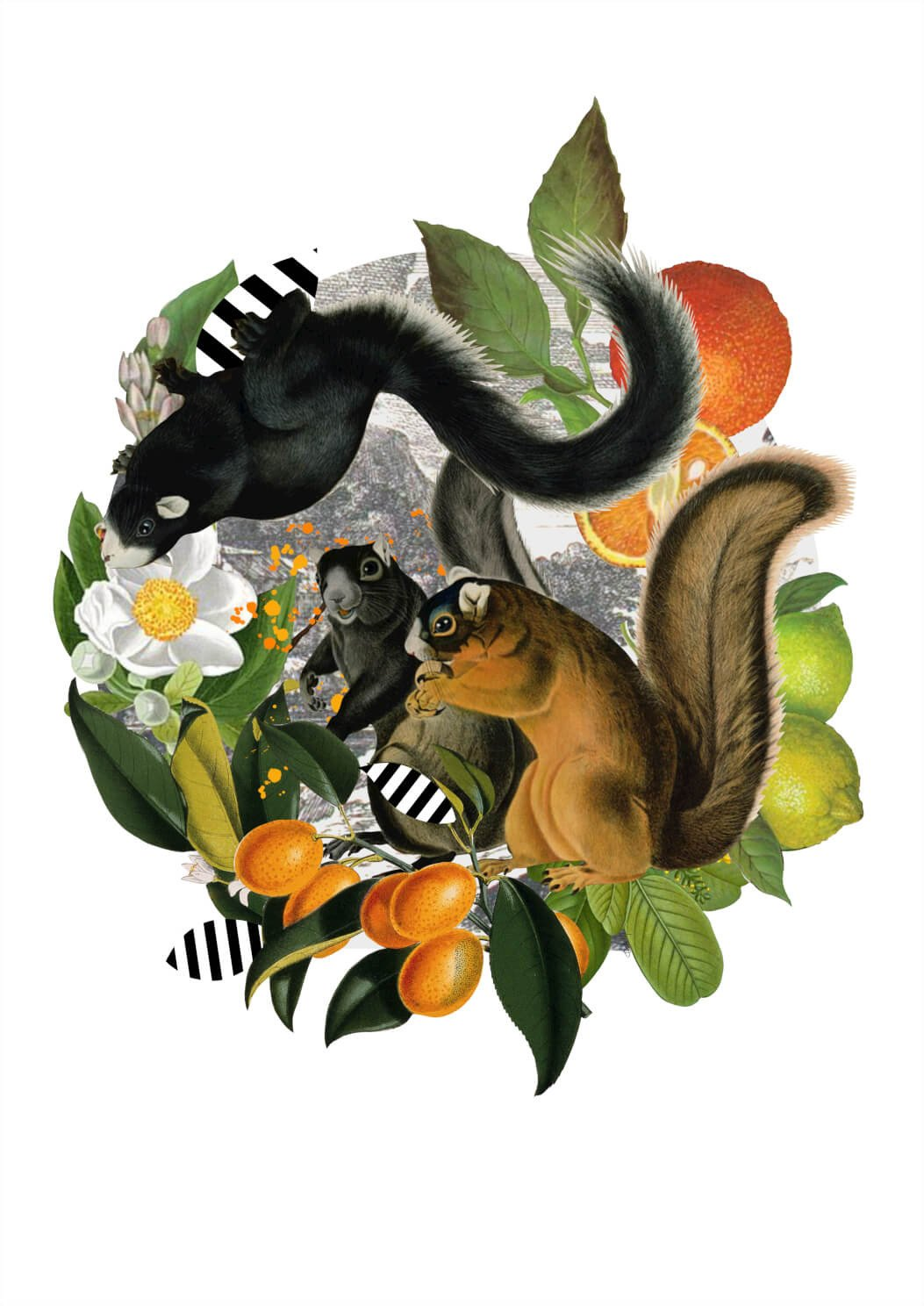 Squirrels in Sicily A3 Print