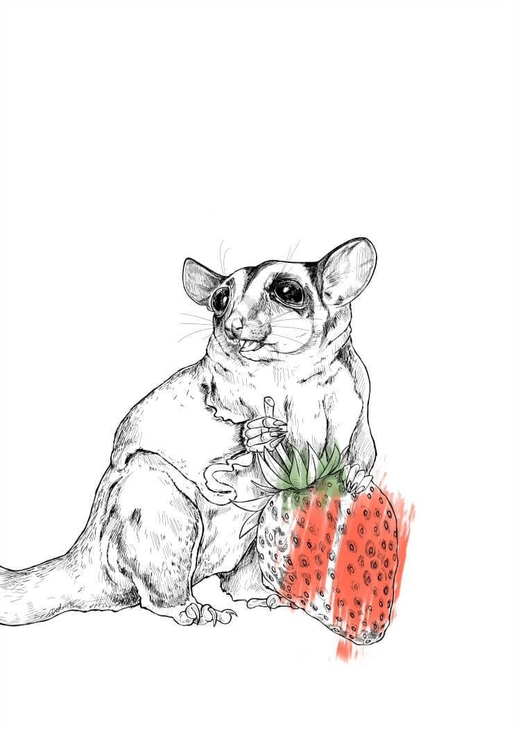 Strawberry Sugar Glider A4 Print