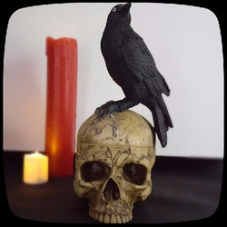 salem skull crow curio box gothic home decor halloween decorations