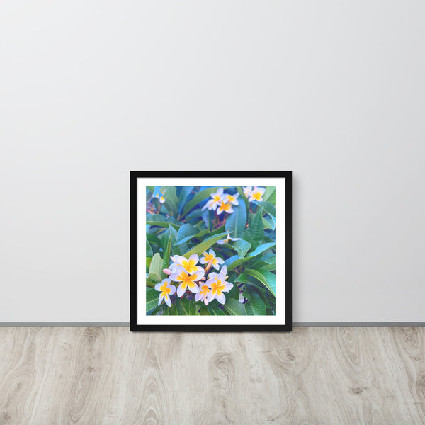 Frangipanis Cape Town Framed photo paper poster
