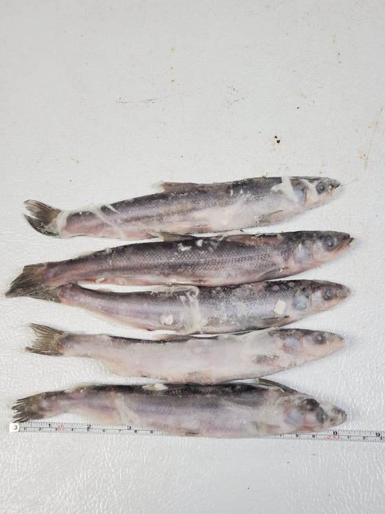 CASE OF JUMBO SMELT
