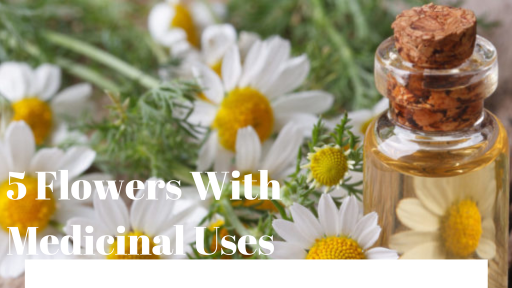 5 Flowers With Medicinal Uses