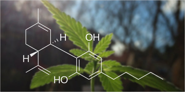CBD has many medicinal benefits