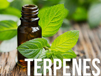 What are Terpenes? Aroma Bottle with mint leaves. Learn more about KleanTerpenes™ Terpene Products