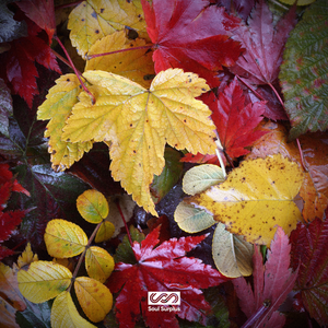 Autumn Bliss (Sample Pack)