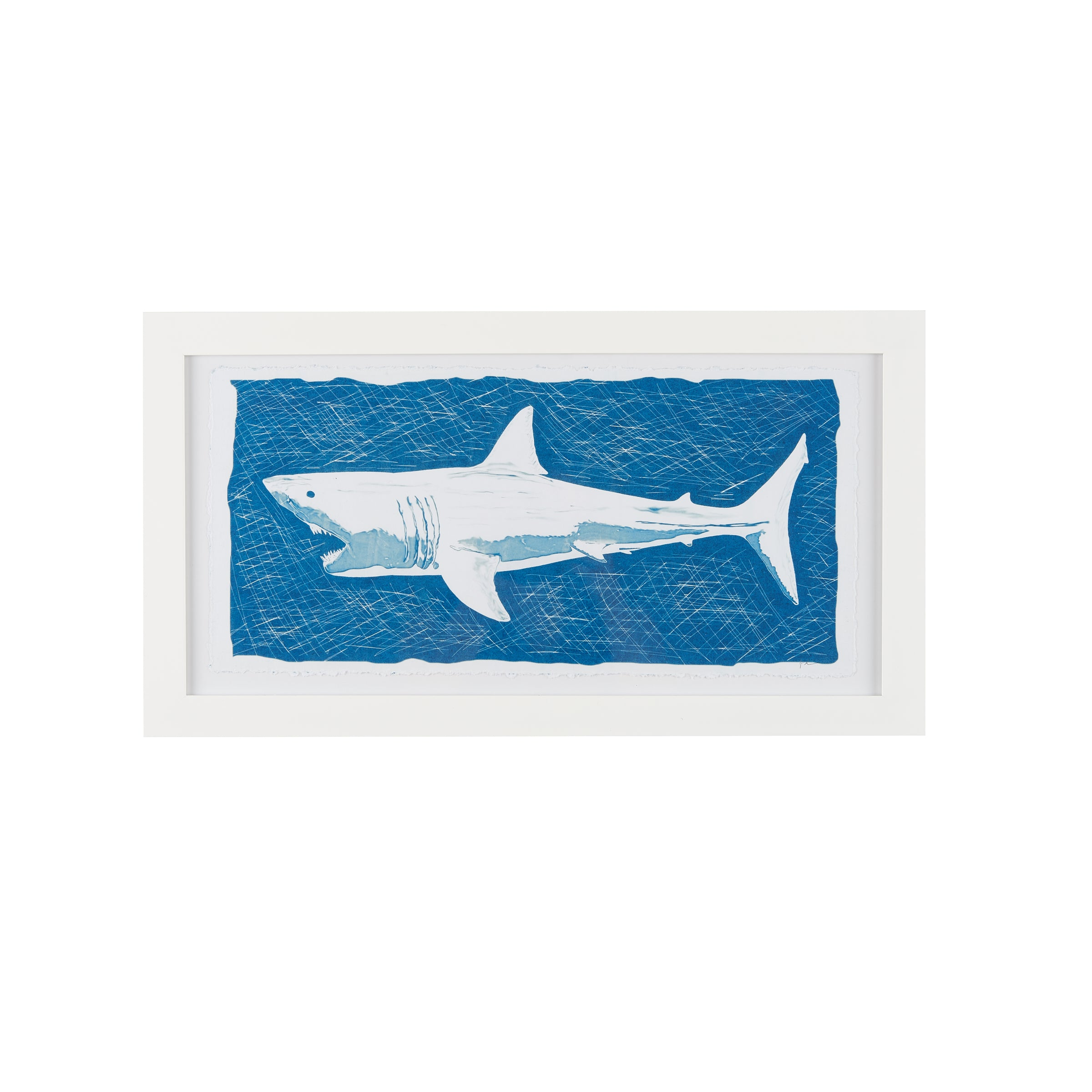 Shark Blueprint