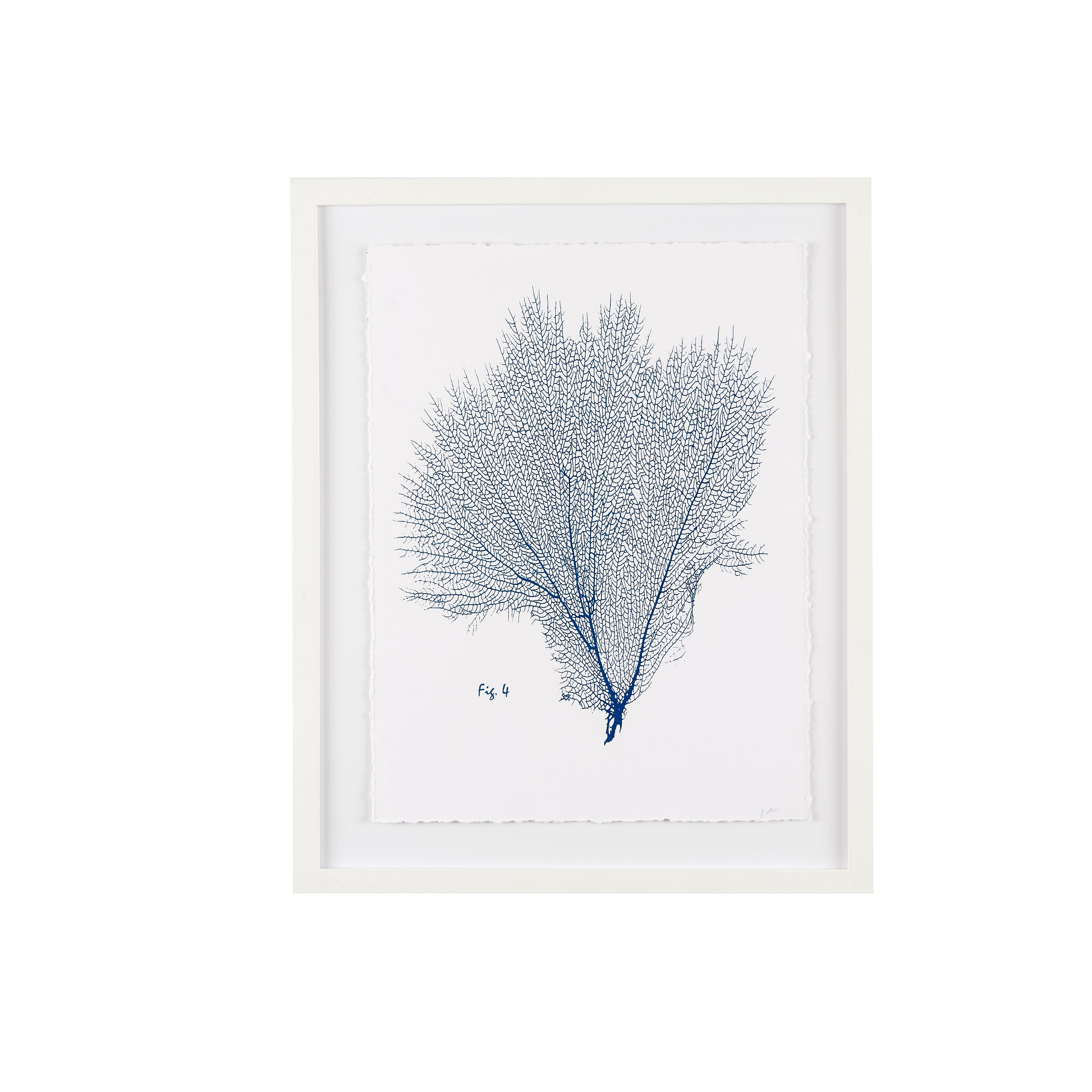 Sea Fan Fig. 4 Blueprint