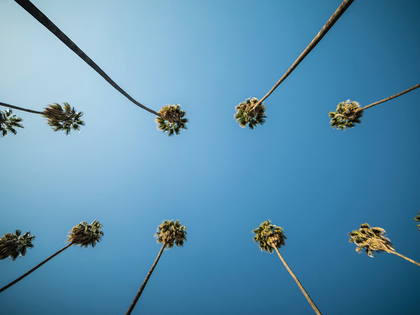 guide to los angeles BLOG WITH PALM TREES AND BLUE SKY
