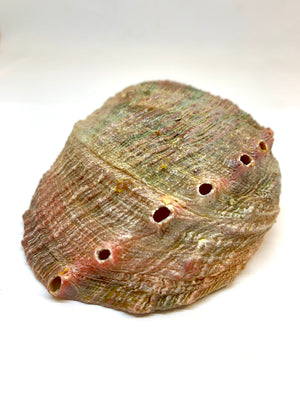Abalone Shell Incense Holder
