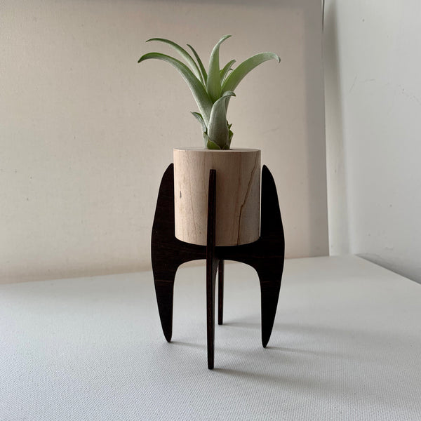 Savvie Studio Wood Air Plant Mini Stands