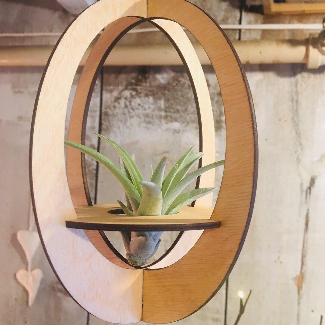 Savvie Studio Wood Air Plant Hanger Mobile