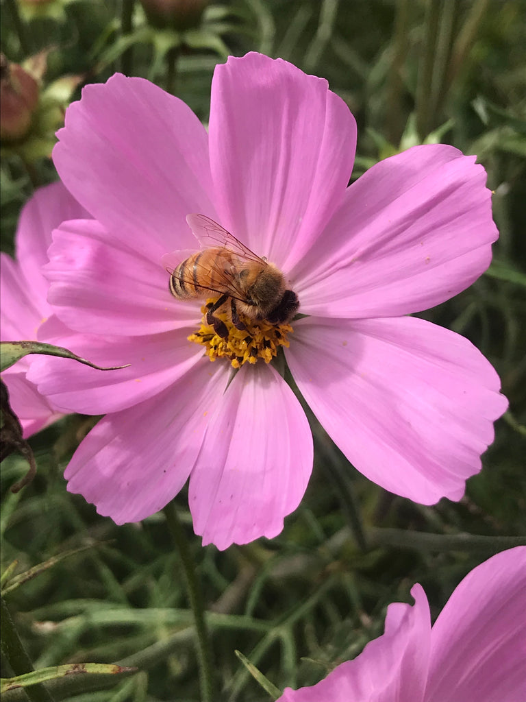 What Can You Do To Help Save The Bees?
