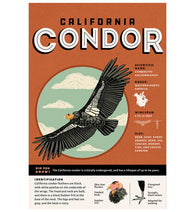 Facts About California Condors Lantern Press Postcard