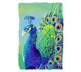 Vivid Color Peacock Lantern Press Postcard