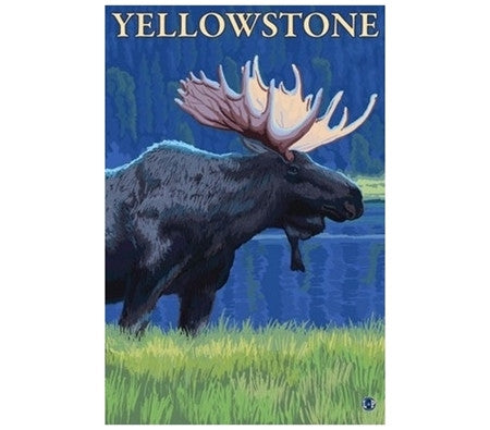 Yellowstone Moose - Lantern Press Postcard