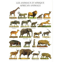 African Animals - Pasta - Nouvelles Images Multiples Ateleir Postcard