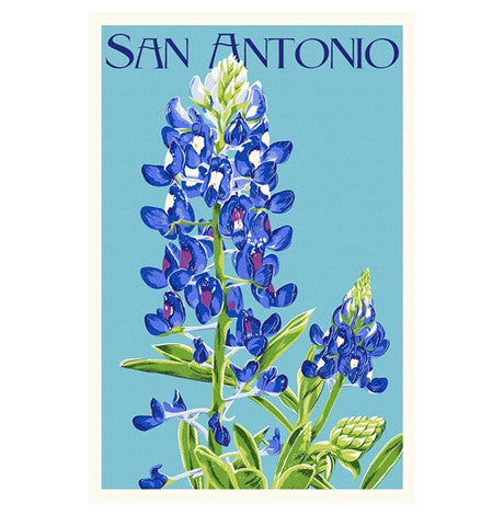 San Antonio, Texas Bluebonnet