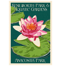 Lotus & Lily Pad Lantern Press Postcard