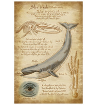 Da Vinci Blue Whale Lantern Press Postcard