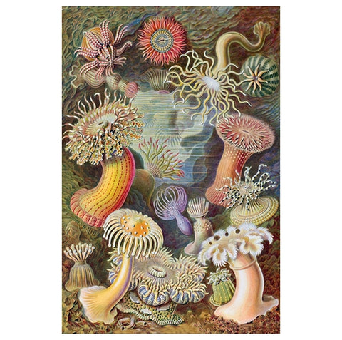 Marine Life Illustration - Sea Urchins - Lantern Press Postcard