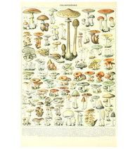 Bookplate Mushrooms Lantern Press Postcard