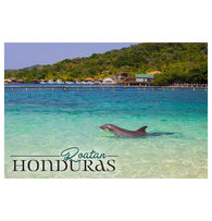 Raotan Honduras Dolphin Lantern Press Postcard