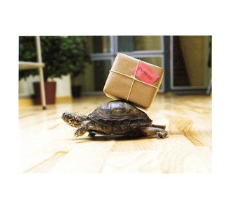 Express - Turtle Carrying a Package