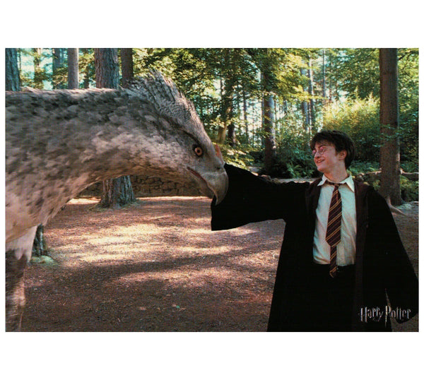 HP:  Harry Petting Buckbeak Postcard