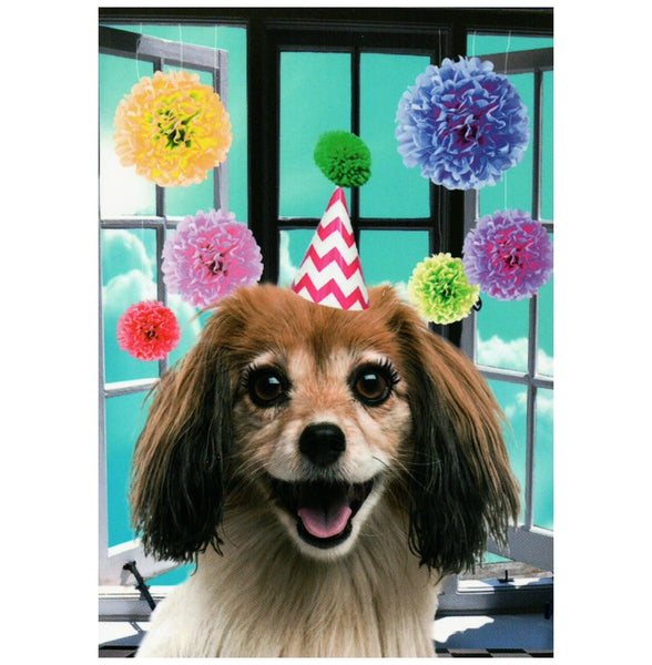 Dekunstboer Birthday Party Dog Postcard