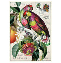 Glittery Tausendschoen Editions Parrots and Fruit Postcard