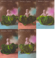 Petite Chou Antique cartes postale Cabbage Baby French tinted photograph - postcards - Set of 5