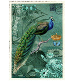 Glittery Tausendschoen Editions Peacock Postcard