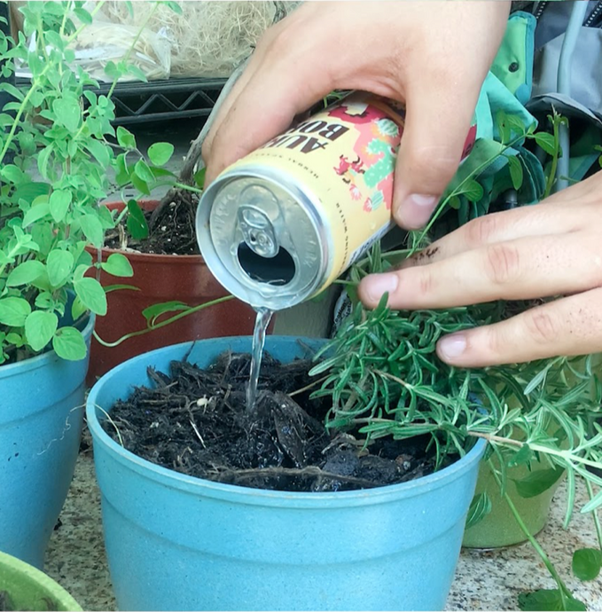 4 Tips for Watering Plants in Containers