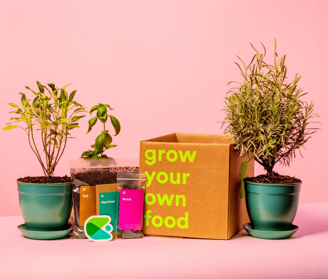 Your first box includes 3 organic plants, equipment for each, and even some branded goodies