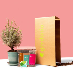 Future seasonal boxes include a single organic plant with its soil, mulch, and compostable pot.