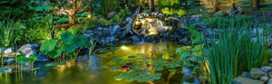 How to: Get the Most From Your Pond Lighting