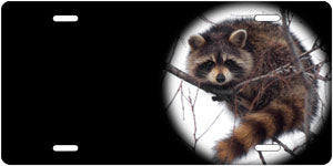 Racoon Auto Tag