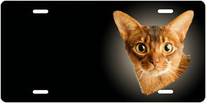 Abyssinian Cat - Auto Tag