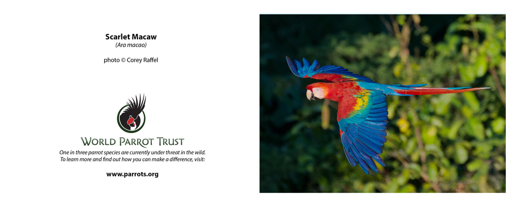 photographs on parrots