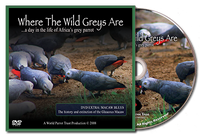 DVD - Where the Wild Greys Are - World Parrot Trust