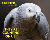 A Promise to Parrots - World Parrot Trust
