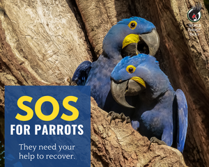 An SOS for Parrot Recovery - World Parrot Trust