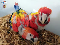 Inspire Hope for Honduras' Macaws - World Parrot Trust