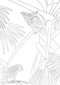 Free colouring page - Grey Parrots - World Parrot Trust