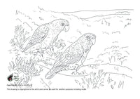 Free colouring page - Cape Parrots - World Parrot Trust