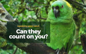 Donate to Save Parrots - World Parrot Trust