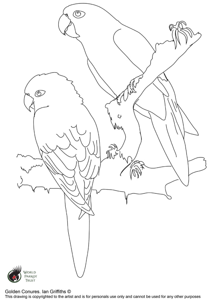 Free colouring page - Golden Conures - World Parrot Trust